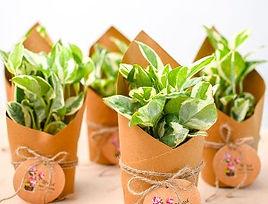 plant_home.jpg