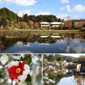สวนพฤกษศาสตร์ที่สร้างโดยชาวอเมริกัน : สวนพฤกษชาติ Chollipo