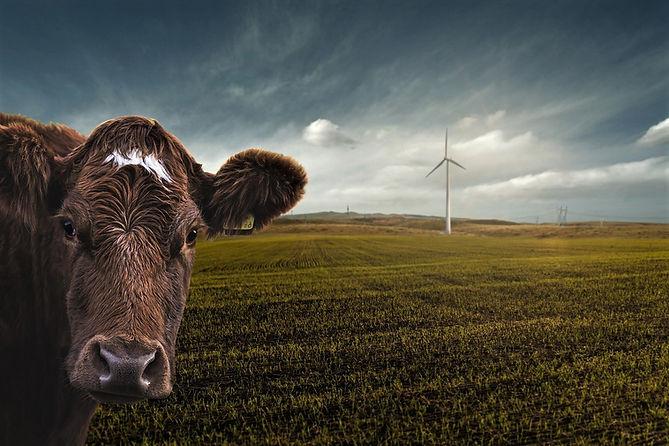 renewable-energy-4176010_1280.jpg