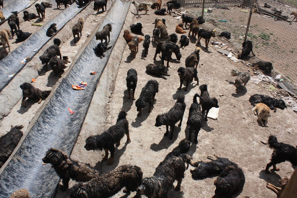 Shelter for stray dogs in Maozhuang in Yushu, on the Tibetan plateau. (Photo by Wang Yan)