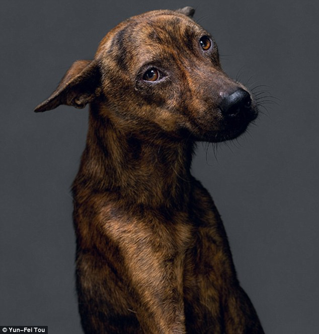 Lost: The dogs in the photo series were all gathered up by dog pound workers, who then put them down