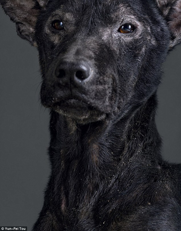Full-faced: Tou took the series to humanize the animals. This dog died just over an hour after the picture was taken