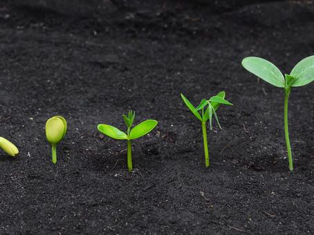 R/K Growth – Measuring Quality