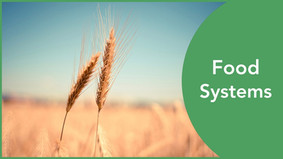 Global Food System: In Numbers