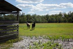Camp Osprey Kids Camp Horse