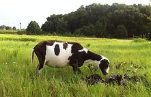 dk-farm-emma-smokeys-dam-1-orig_1_orig.j