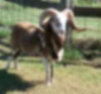 pavlock-farms-cruz-orig_orig.jpg