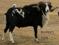 bentley-s-tank-profile-1-orig_orig.jpg