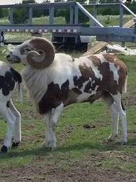 pavlock-farms-boss-cruz-orig.jpg