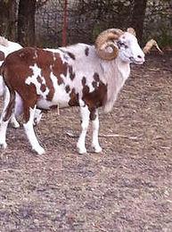 alviso-ranch-rojo-diablo-orig.jpg