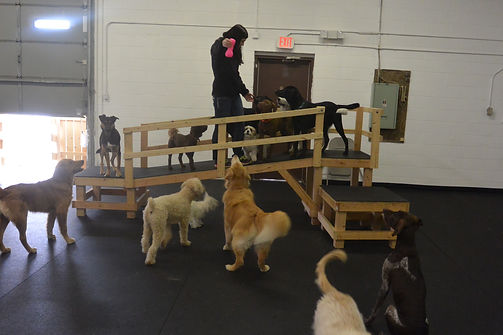 dog daycare, doggie daycare, dogs