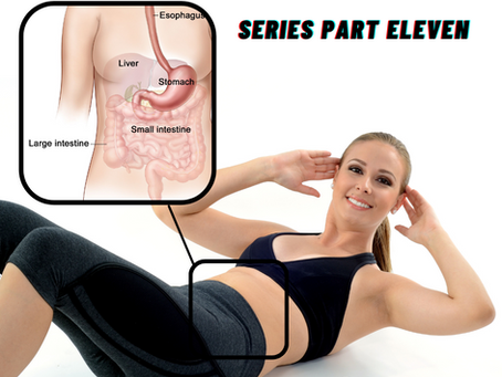 MEET YOUR LARGE INTESTINE: Series Part Eleven
