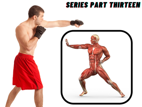MEET YOUR MUSCULAR SYSTEM: Series Part Thirteen
