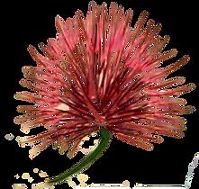 Calliandra_logo_2-removebg-preview.png