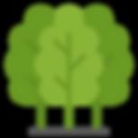 Plantation etentretien des forêts EcoTree