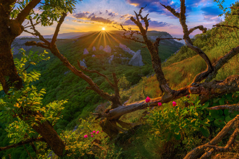 Пионы и Храм Солнца, Крым