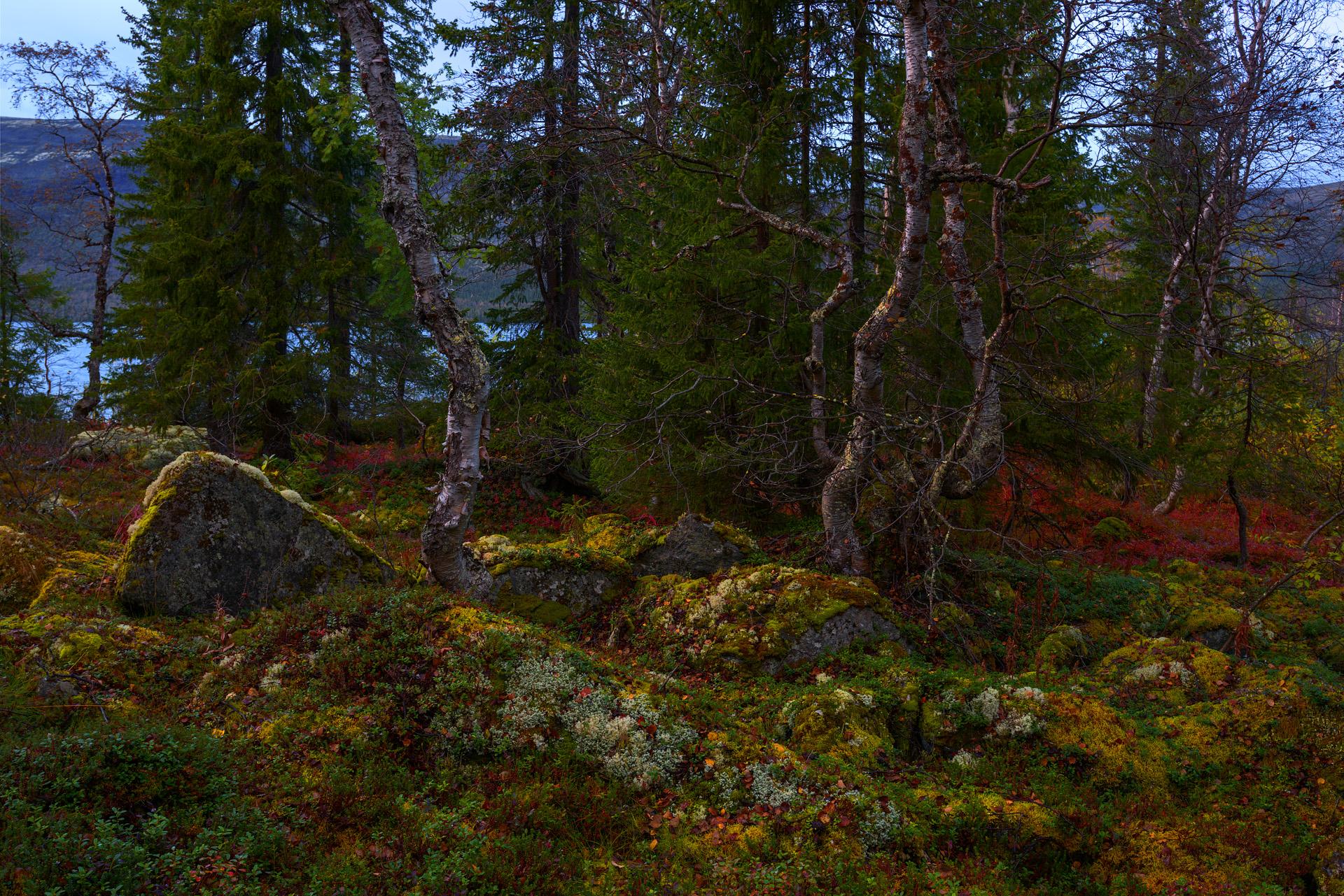Осень на крайнем севере