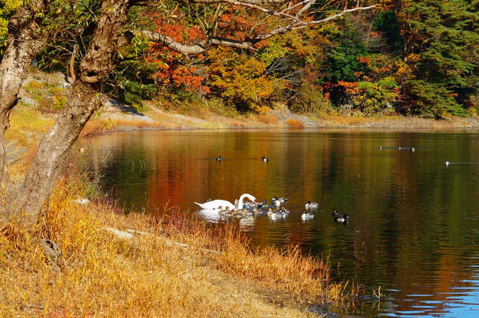 ほのぼの 加瀬沼の鳥達