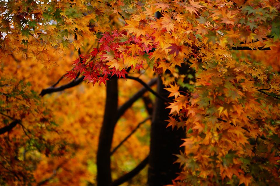 瑞鳳ヶ丘の秋