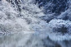 銀の世界 寒風沢溜池にて