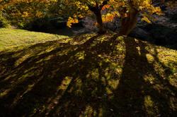 春日水源池 一本の紅葉