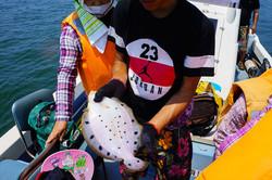 伝統漁法でホシガレイ!