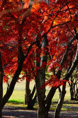 加瀬沼の紅葉
