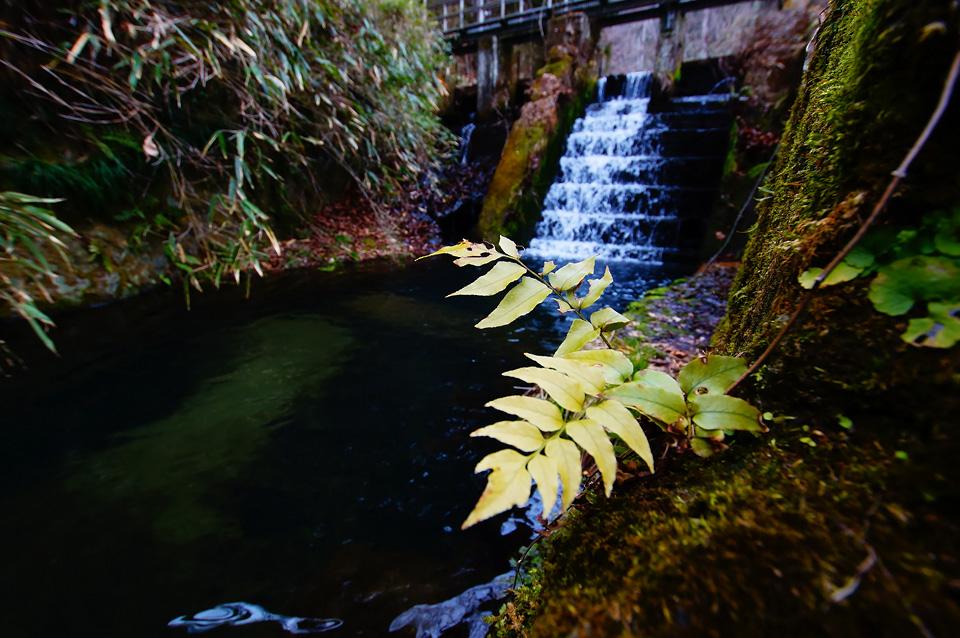 水落 春日水源池にて