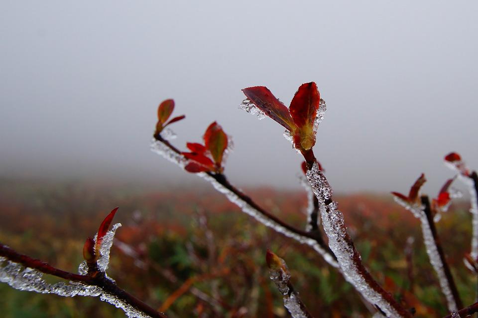 栗駒山 冬景色