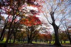 加瀬沼公園の紅葉