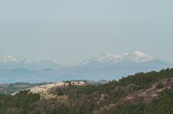 館山の桜は伊達三日月