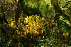 自然の絵画 春日水源池て
