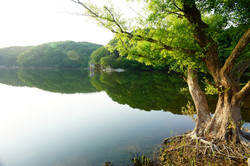 穏やかな朝 加瀬沼