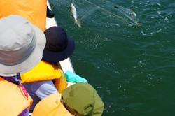 伝統漁法で魚を
