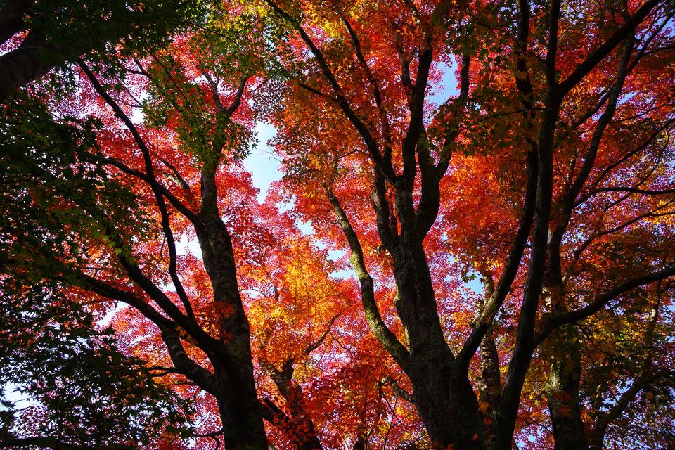 平場に舞い降りた秋色