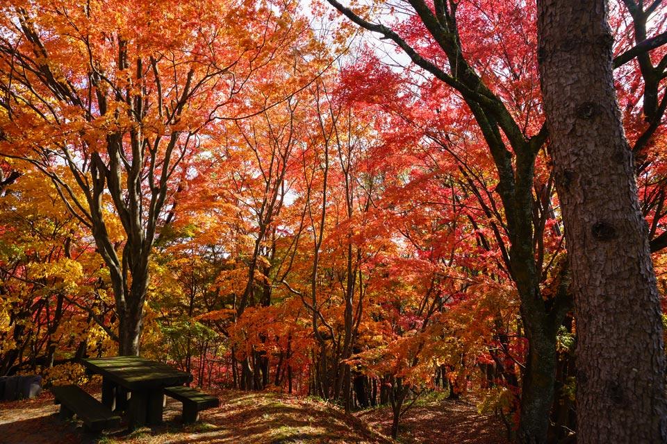 宮城県県民の森の紅葉