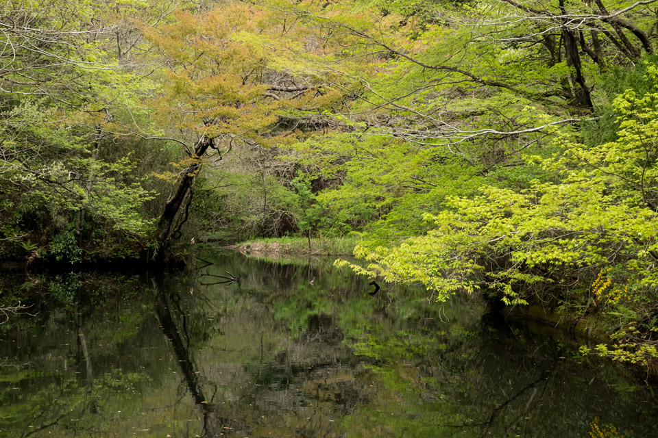 癒しの空間 春日水源池