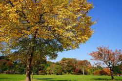 秋の加瀬沼公園