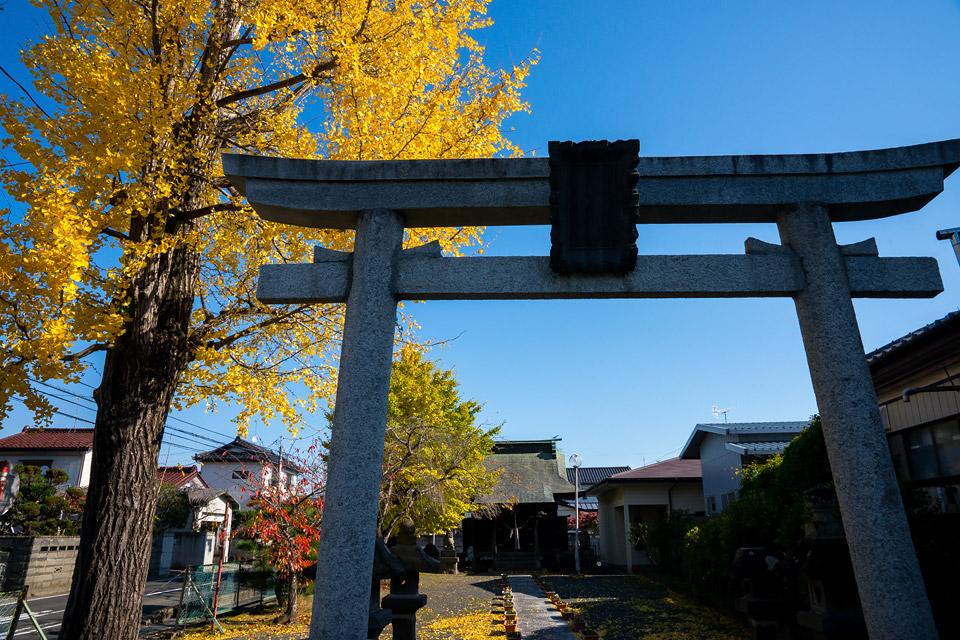 八幡神社のイチョウ