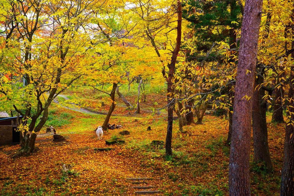 森郷キャンプ場のプチ紅葉