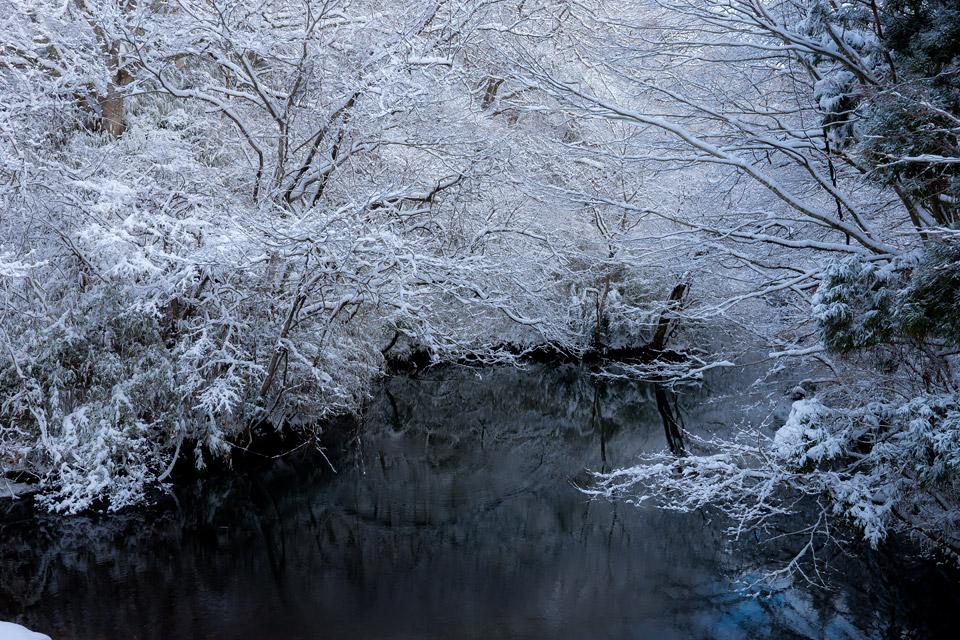 静寂 春日水源池