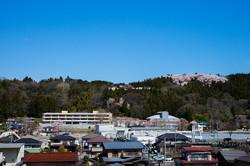利府小学校と利府城址館山公園の桜