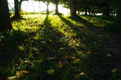 晩秋の梨園