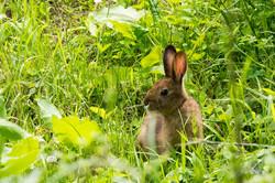 春日水源池で野ウサギと出会う