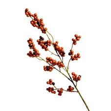 Beeren, rot