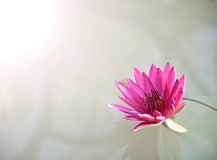 flora-1839558.jpg