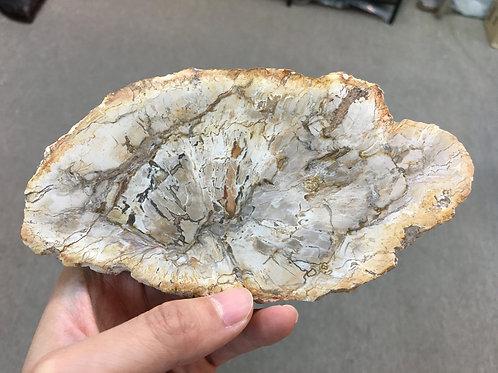 木化石 Petrified Wood ( 已售 / Sold )