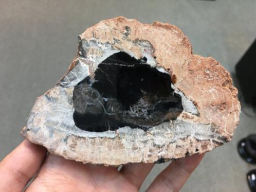 木化石 Petrified Wood ( Black / 黑 ) ( S )