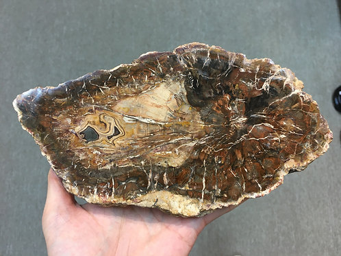 木化石 Petrified Wood ( L1 )