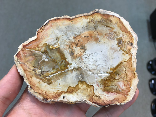 木化石 Petrified Wood ( S1 ) ( 已售/ Sold )